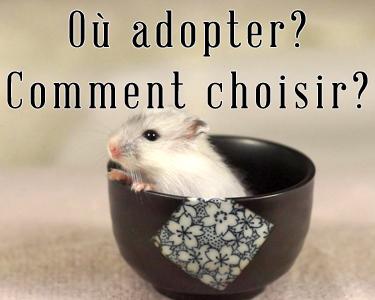 Où l'adopter et comment le choisir?