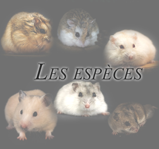 Les espèces