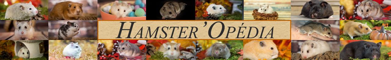 Hamster'opédia