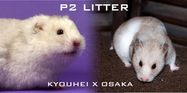 p2litter
