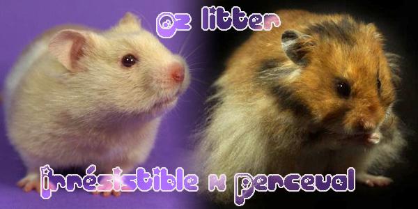 o2litter