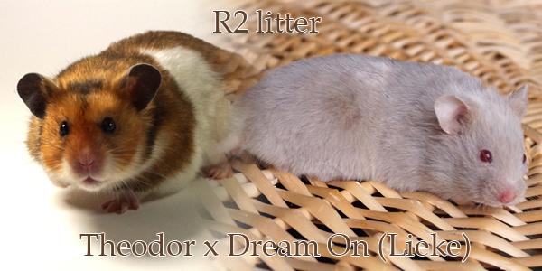 r2litter