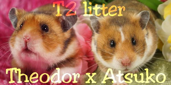 t2litter