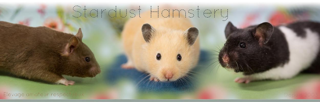 Stardust Hamstery